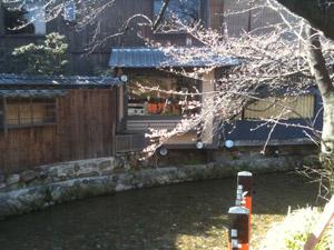 Sakura_110401