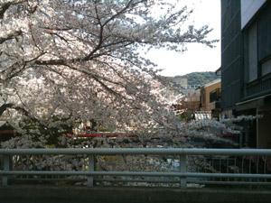 Sakura20110407