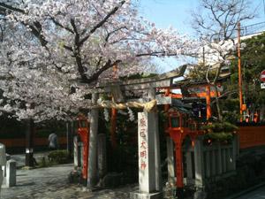 Sakura20110410_2