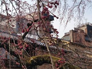 Sakura2b